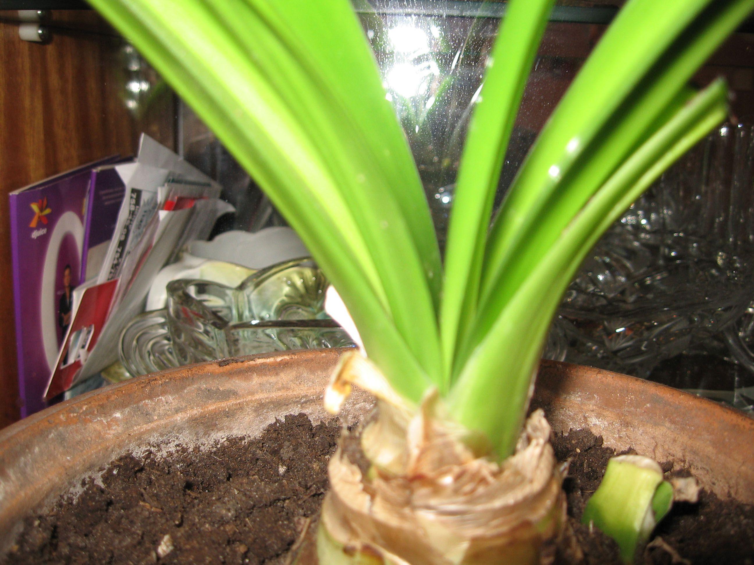 Поиск растений по фото онлайн