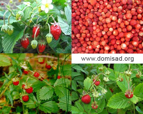 Технология и условия выращивания