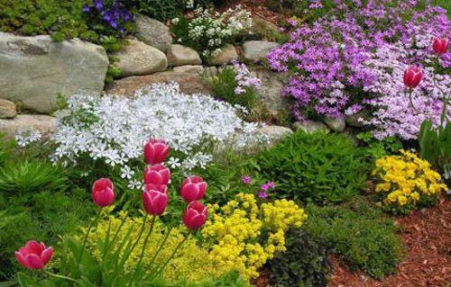 цветок, растение, альпийский, горка, альпийском стиле, горки альпийском