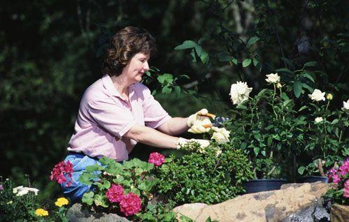 цветник, дачный, участок, уход, декоративными растениями