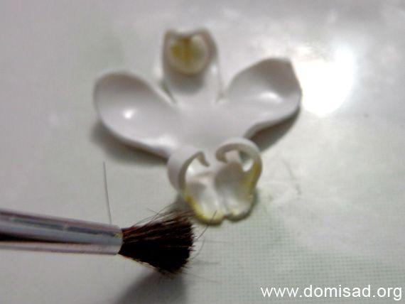 orhideya14