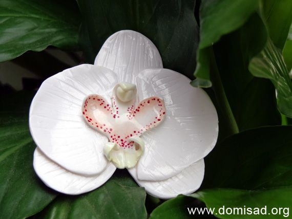 orhideya23