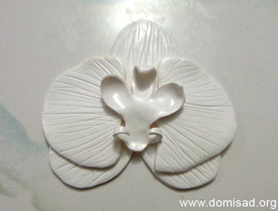 orhideya8