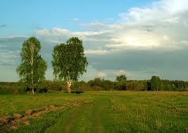 Высокие деревья на земельном участке