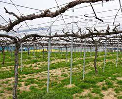 Шпалера для винограда своими руками, изготовление по фото и чертежам