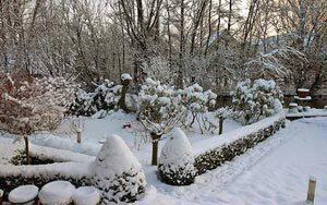 Живая изгородь в саду зимой