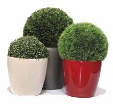 Pots for shrubs