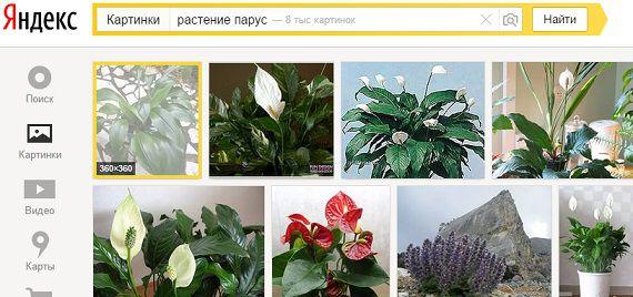 Поиск растения