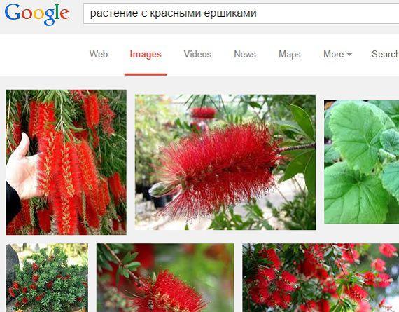 Поиск цветка