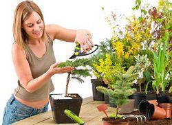 Женщина подрезает растение