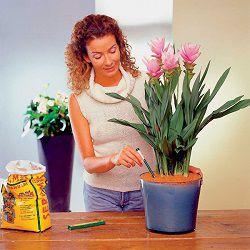 Женщина пересаживает цветок