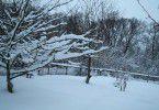 Деревья в саду зимой