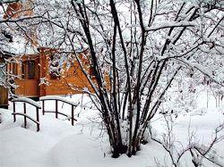 Дерево в саду зимой