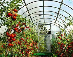 Теплица для помидор и огурцов