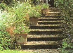Деревяные ступеньки в саду
