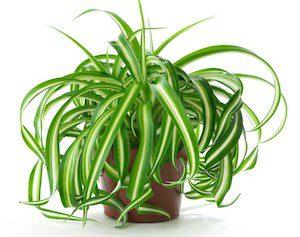 7 растений, которые стоит иметь в квартире