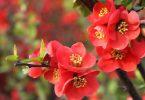 Красные цветы в интерьере
